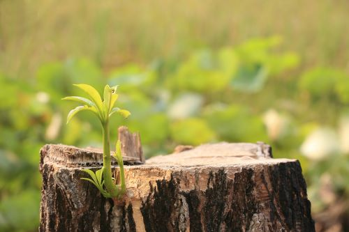 Mr.-Tree-What-Happens-to-Tree-Roots-When-Tree-Is-Cut-Down-and-What-Can-I-Do-About-Them